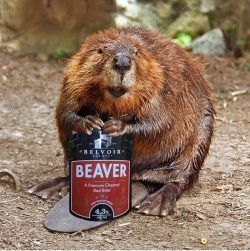 Beaver Animal (pump clip 1)